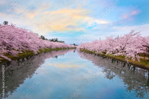 Deurstickers Asia land Full bloom Sakura - Cherry Blossom at Hirosaki park, Japan