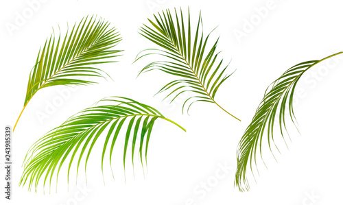 Foto auf Leinwand Palms Collection set of palm leaf tree isolated on white background..