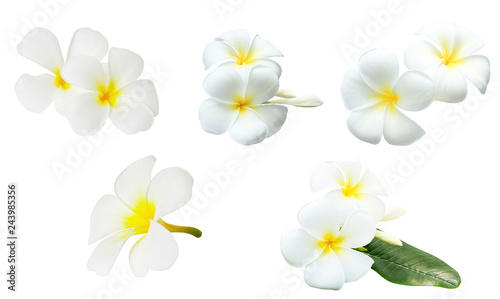 Tuinposter Frangipani Collection of white tropical flowers frangipani (plumeria) isolated on white background..