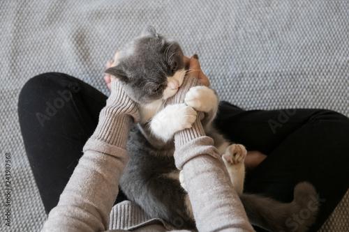 Fotografie, Obraz  Holding a lovely British short-haired cat.