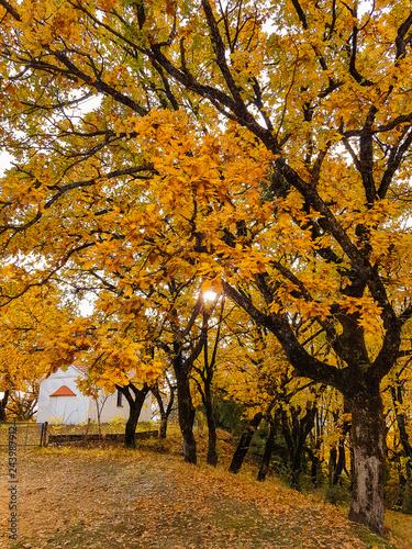 Aluminium Prints Autumn motorbikes on the road in autumn colors oak trees in Tzoumerka Arta Greece