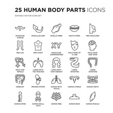 Set Of 25 Human Body Parts Linear Icons Such As Mustache Curled Tip Variant, Muscular Arm, Muscle Fiber, Mouth Open, Vector Illustration Of Trendy Icon Pack. Line Icons With Thin Line Stroke.