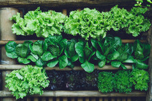 Background Leaf Vegetable Green Fresh