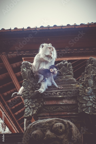 Deurstickers Asia land Monkeys on a temple roof in the Monkey Forest, Ubud, Bali, Indonesia