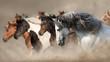 Horse herd run gallop in desert dust