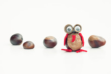 Funny Owl Shape Character Or Figurine Made With Chestnuts In White Isolated Background
