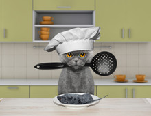 The Hungry Cat Is Going To Coo...