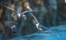 Birds Flying Above Blue River