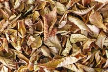 Autumn Leaves Providing A Natural Carpet In A UK Park