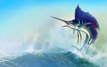 Sailfish Fish On White. Stripe...