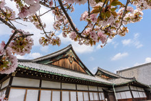 Cherry Blossoms Over Nijo-jo, ...