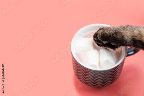 Fotografia, Obraz  マグカップの中のホットいちごミルクの味見をするイタズラ猫