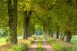 Leinwandbild Motiv Avenue of Horse Chestnut Trees through Rural Landscape
