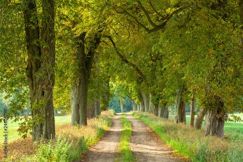 Avenue of Horse Chestnut Trees through Rural Landscape Wallpaper Mural
