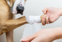 Medical Treatment Of Pet Conce...