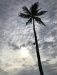 palm tree on background of blue sky and clouds