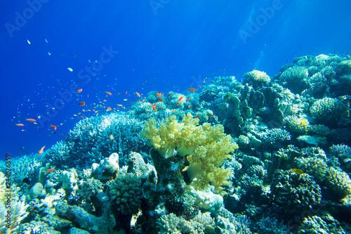 Foto op Aluminium Onder water Tranquil underwater scene with copy space