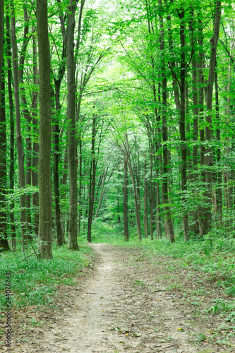 Foto op Aluminium Groene Forest trees. nature green wood sunlight backgrounds