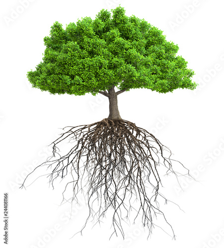 Tablou Canvas a tree with roots isolated 3D illustration