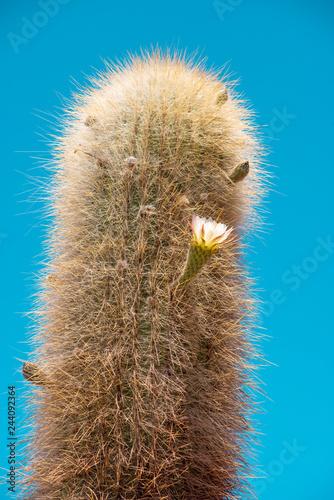 Fotografía  giant cactus plant