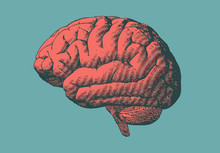 Brain Illustration In Retro Style Isolated On Green BG