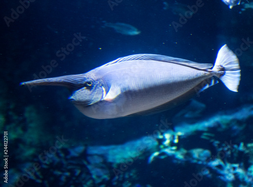 Underwater landscape with coral reef and fish. The aquarium inhabitants of the underwater world.