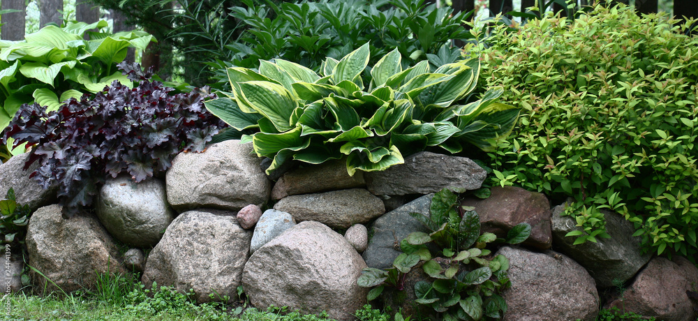 Fototapety, obrazy: On perimeter of a rural garden the border is made of natural stones among which various ornamental plants grow.
