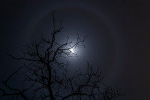Moon Halo And Tree Silhouette