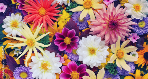 Poster Floral beautiful floral background for greeting or postcard. toning