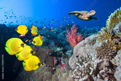 Poster Coral reefs Underwater coral reef landscape in the deep blue ocean with colorful fish and marine life.