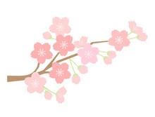 さくら34 桜
