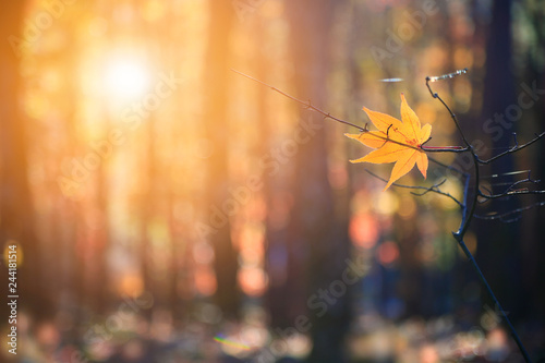Foto op Aluminium Diepbruine Lonely yellow leaf against background of autumn forest.