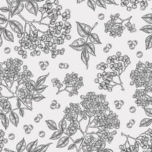 Elderberry And Elderflower Seamless Pattern. Hand Drawn Sambucus Flowers, Leaves And Berries. Vector Illustration Vintage.