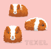 Guinea Pig Texel Cartoon Vecto...