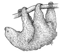Sloth Illustration, Drawing, E...