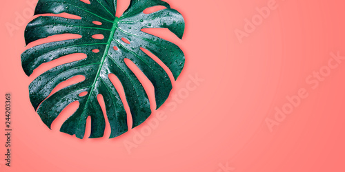 monstera-tropical-leaves-on-coral