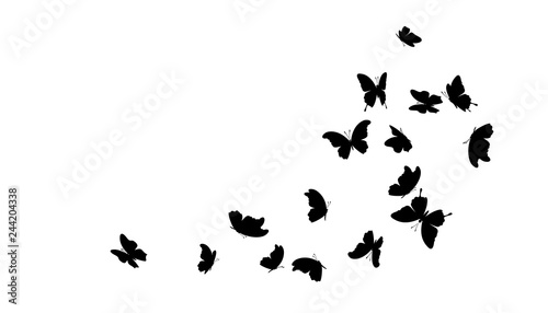 Fotografie, Obraz  Flying butterflies. Vector decoration element.