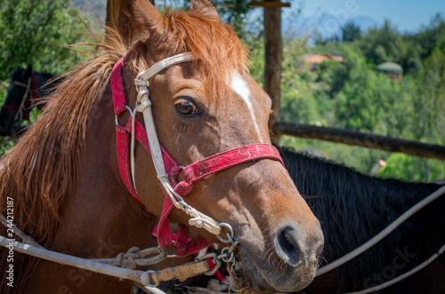 Photo  closeup horse head. horses head drawn by