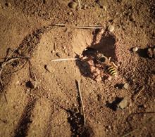 Wisp On The Sand Ground