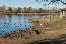 Lake Balboa Vista In Winter, L...