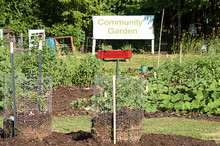 Produce Growing In Community G...