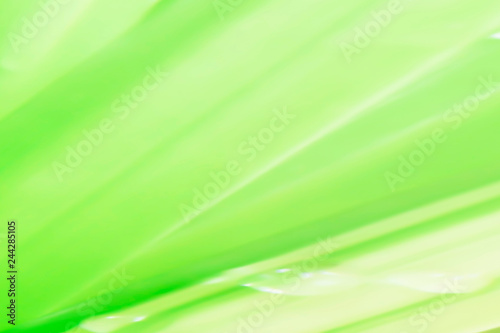 Closeup nature green for background/texture leaf blurred and greenery natural plants branch in garden at summer under sunlight concept design wallpaper view with copy space add text. #244285105