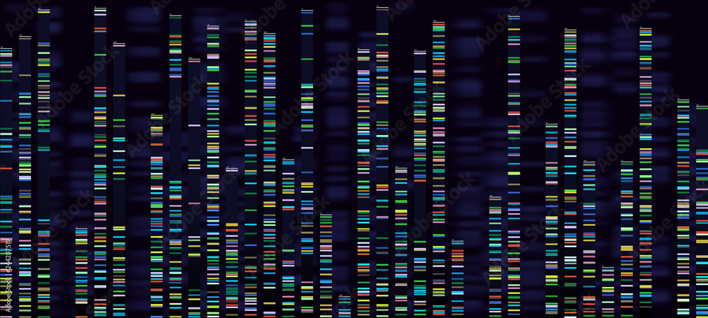 Fototapeta Genomic analysis visualization. Dna genomes sequencing, deoxyribonucleic acid genetic map and genome sequence analyse vector concept