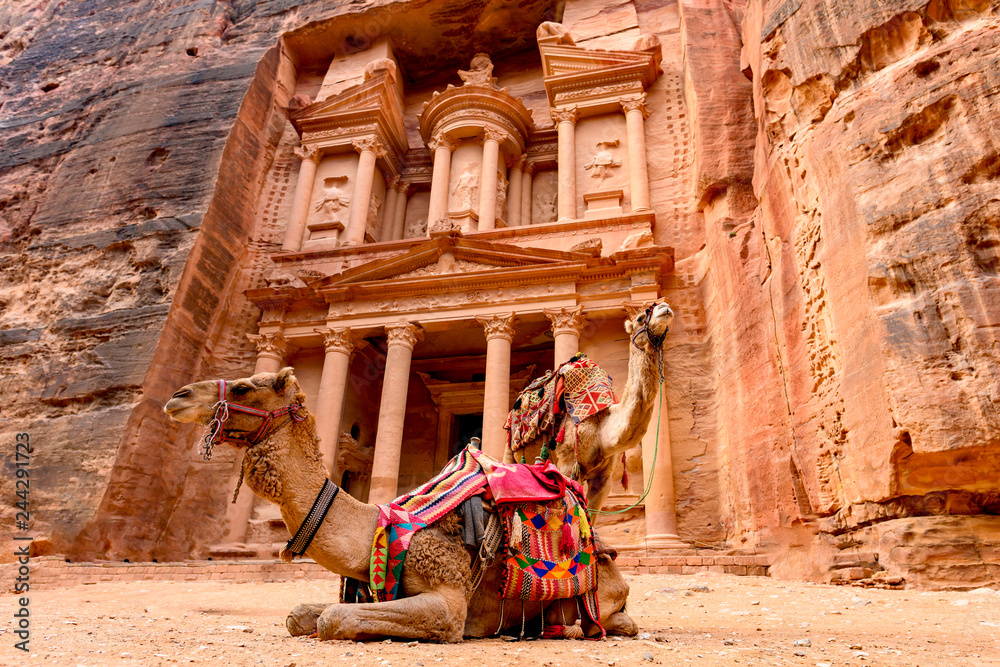Fototapety, obrazy: Spectacular view of two beautiful camels in front of Al Khazneh (The Treasury) in Petra. Petra is a historical and archaeological city in southern Jordan.