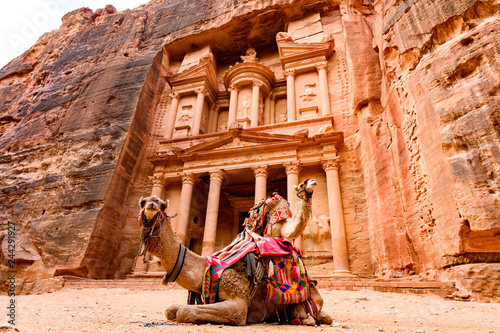 Fototapeta Spectacular view of two beautiful camels in front of Al Khazneh (The Treasury) at Petra