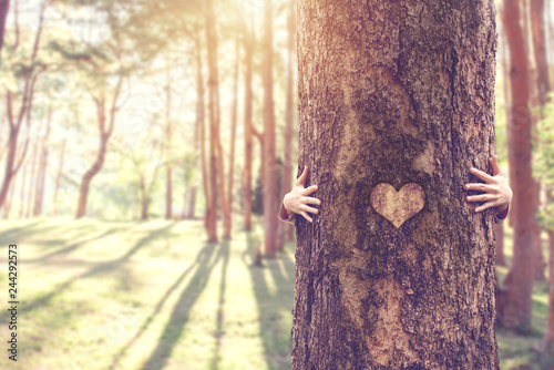 Closeup hands of woman hugging tree with heart, copy space.
