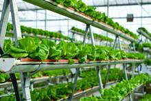 Hydroponic Vertical Farming Sy...