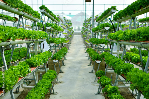 Photo Hydroponic vertical farming systems