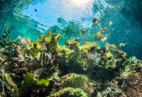 Scuba diving at the Cenote Nicte Ha in Mexico