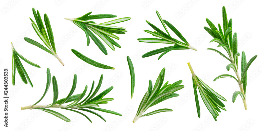 Fototapety, obrazy: Rosemary twig and leaves isolated on white background with clipping path, collection